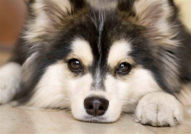Дрессировку собаки можно начинать в любом возрасте