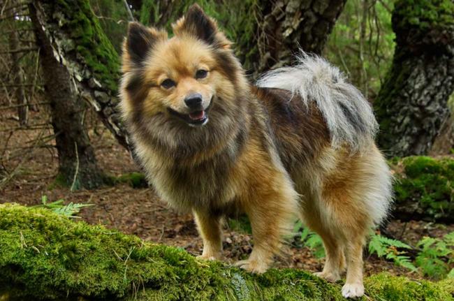 На фермах собак использовали в качестве дозорных