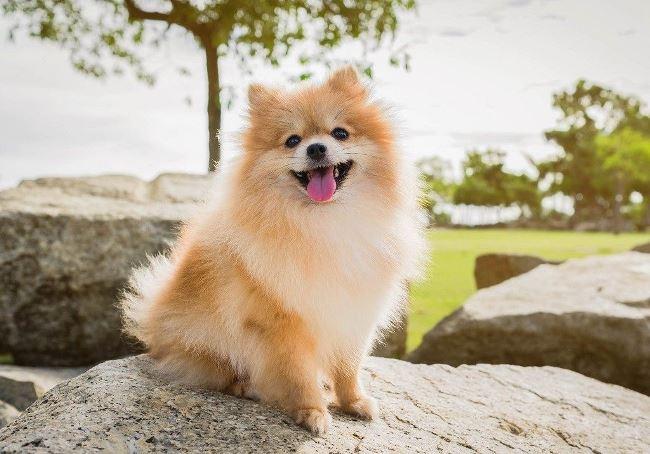 У собак хорошо развит иммунитет