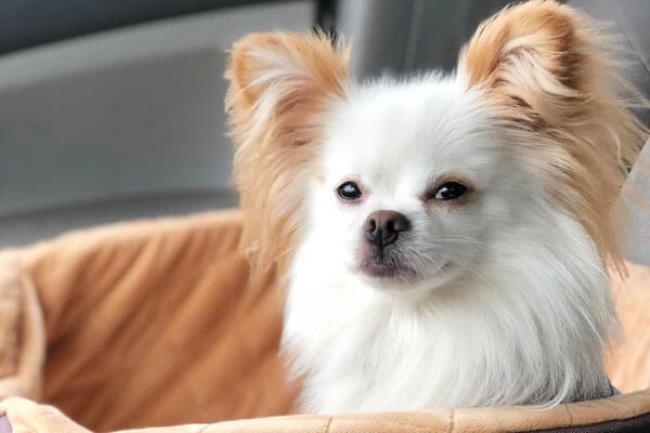 Перед покупкой внимательно проверьте все документы на собаку