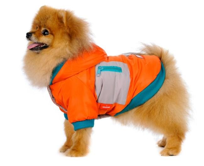 Шпиц в куртке