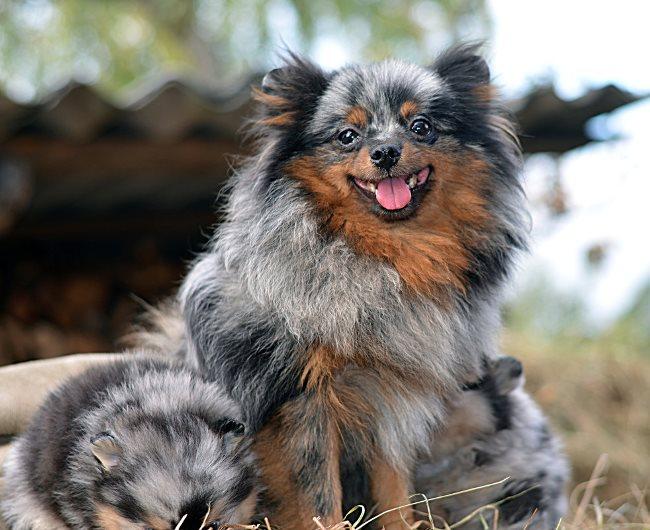 Собака очень чувствительна к перепадам настроения хозяина