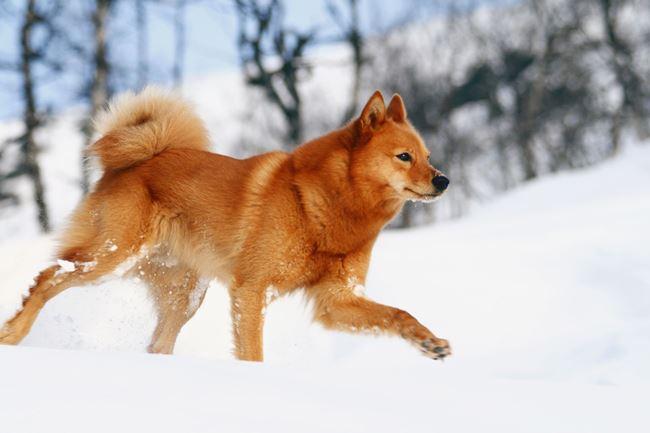 Собаке требуются регулярные физические упражнения