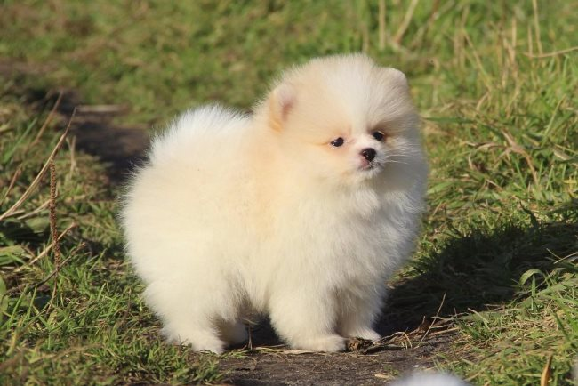 Выбирайте щенков от 3 до 4 месяцев