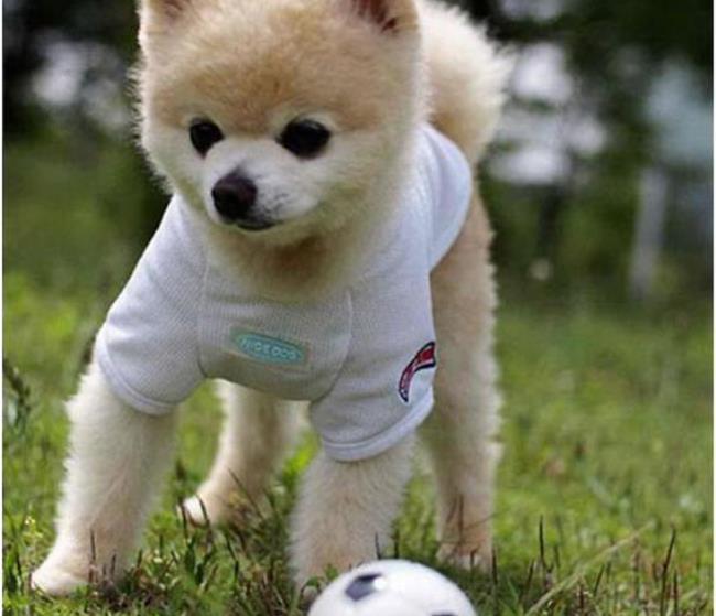Маленькие мячики отлично подходят для игр