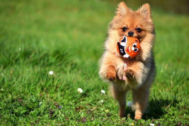 Питомец с мячиком