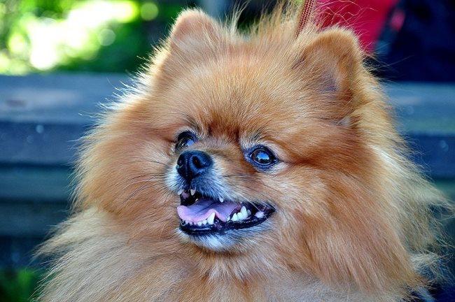 Пищевая аллергия индивидуальна у каждой собаки